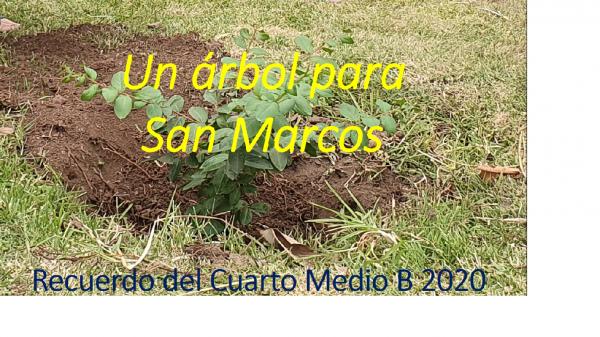 Cuarto Medio B 2020 planta un árbol en el Colegio